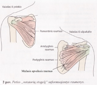 skausmas dubens srityje pereinantis i koja