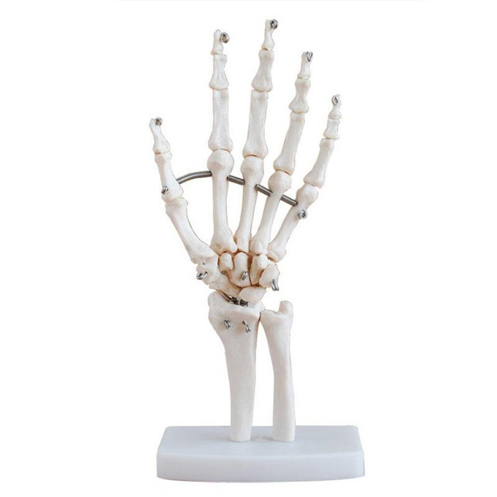 gerklės sąnariuose skeleto pagalba skausmas