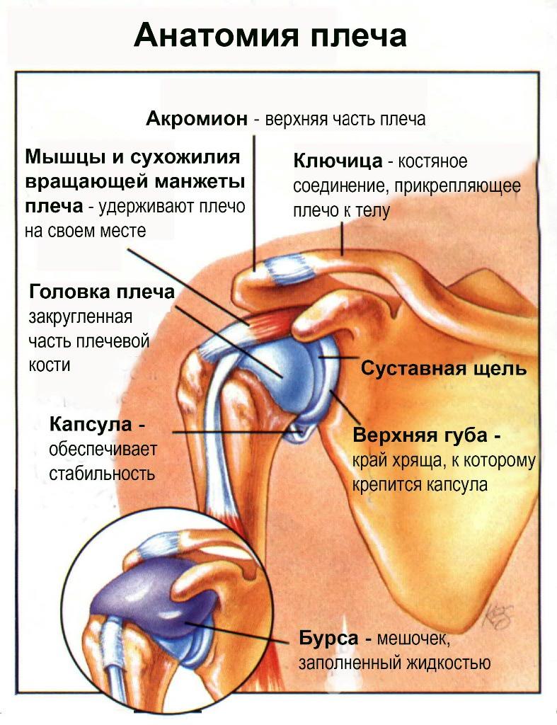 roe su artrozės siūlės fell skauda klubo sąnario