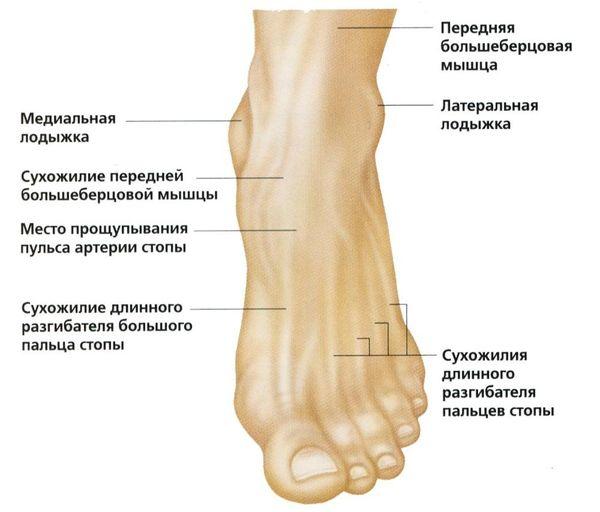 kiek trunka reabilitacija po kojos luzio visų gydymo skausmo sąnarių