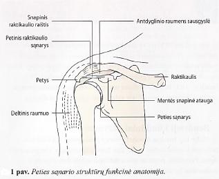 skausmas peties sąnarių raumenų rankiniai opos peties sąnario