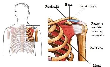 skauda nervų klubų tepalai pašalinimas osteochondrozė