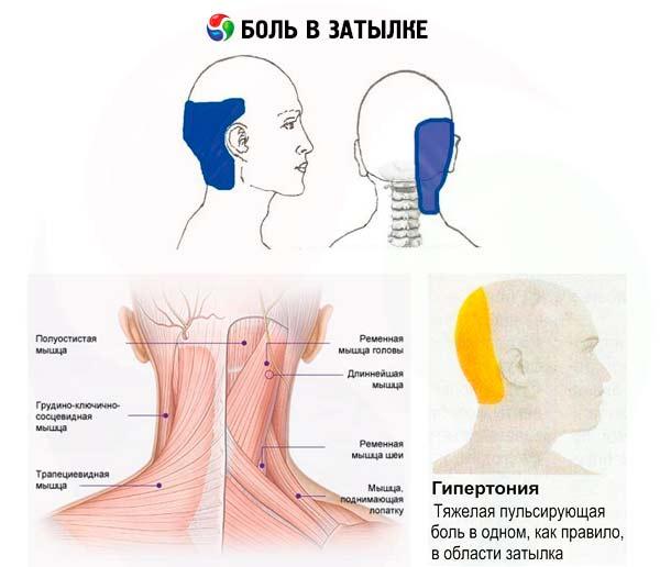 derinys gliukozamino ir chondroitino sužeistas ir krizė visi sujungimai gydymas