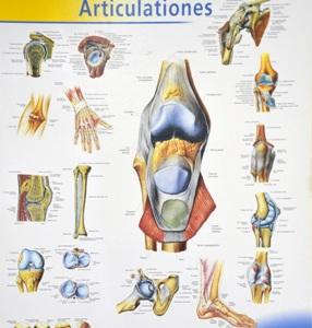1 gydymas artrozės