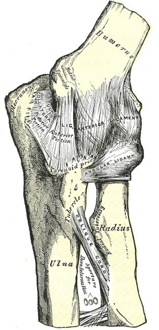 kaulų ir sąnarių ligų gydymas