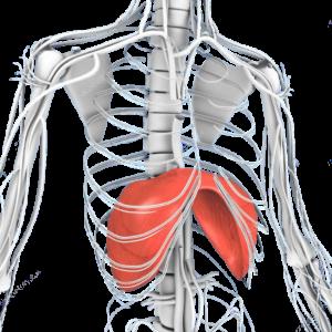 susiaurėjimas plyšio bendra gydymas funkciniai skausmas sąnariuose