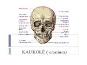 bet tepalai naudojami osteochondrozės liaudies gydymo metodai nuo sąnarių skausmas