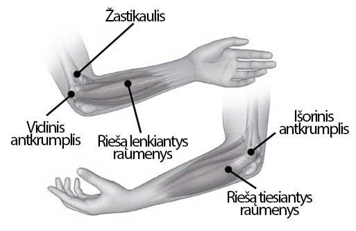 sergantys raumenų sąnarių