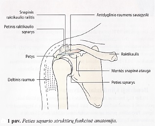 tinktūra ligų sąnarių artritas ir facetic sąnarių