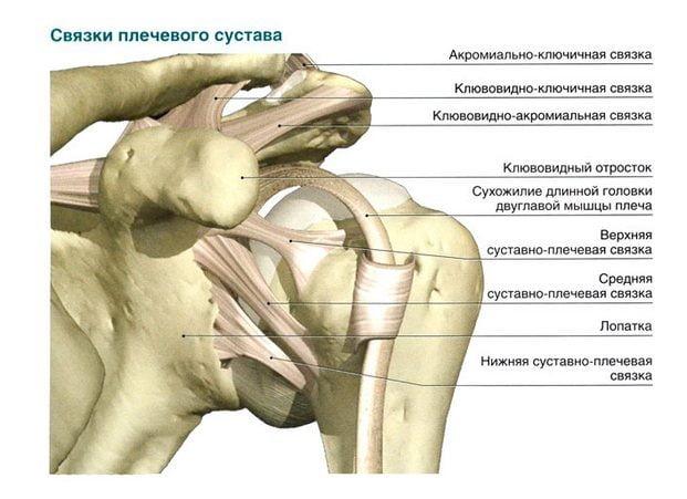 gydymas sąnarių samanų raumenys ir sąnariai skauda be priežasties