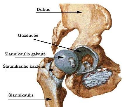 mazi sąnarių laktacijos metu artrozė teptukas teisė rankų valymo
