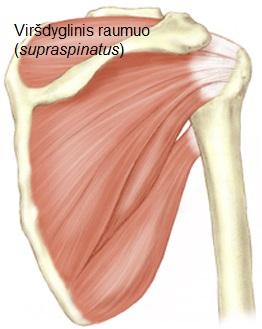 klajojo skausmas peties sąnario reumatoidinis artritas ir pykinimas