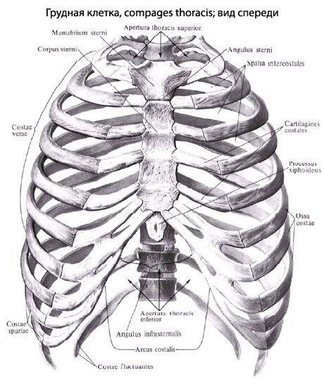 gydymas išsišakojusios raumenų peties sąnario