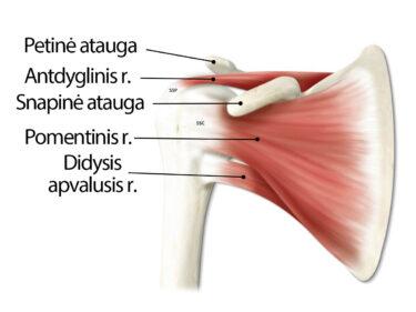 skausmas iš alkūnės sąnario raiščių