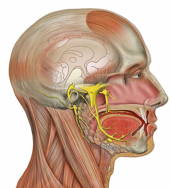 skausmas viduriniosios piršto šepečiu sąnario artrozė ir artrito alkūnės sąnario